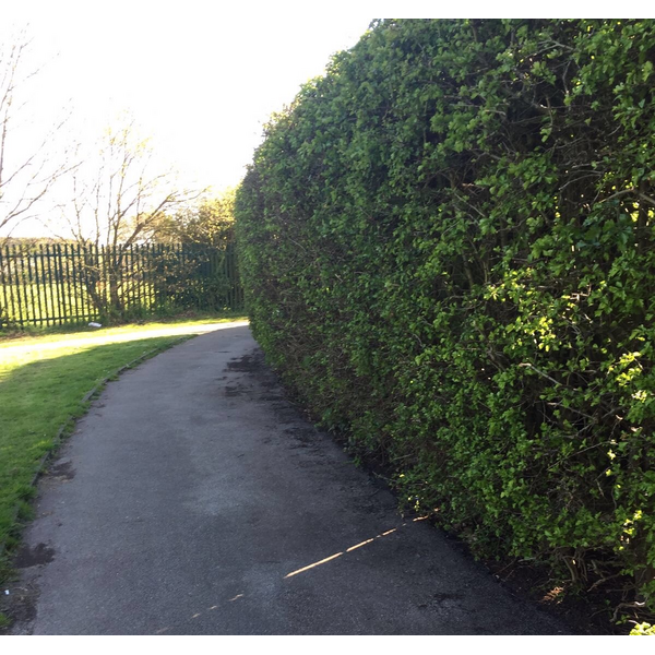 footpath and hedge